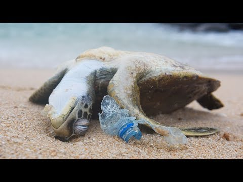 POWERFUL VIDEO: Why We Need To Stop Plastic Pollution In Our Oceans FOR GOOD | Oceana