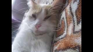 Клип с моим котом под песню Call Me Maybe+Blow