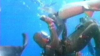 Shark vs. Chain mail suit