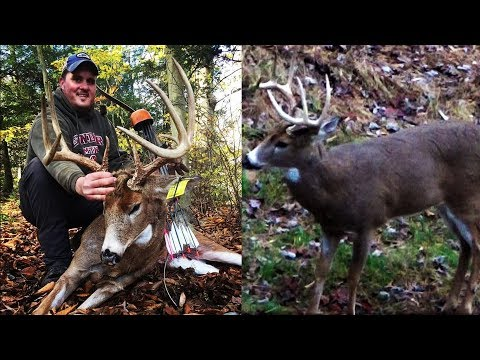 HUGE!! 9 POINT BUCK TAKEN WITH A RECURVE BOW - Traditional Whitetail Deer Bow Hunting - 2019 Archery