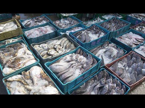 STREET FISH Market | How Fish Are Stored And Sold In Street Market