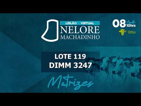 LOTE 119   DIMM 3247