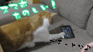 猫にとってはスマホもオモチャ! thumbnail