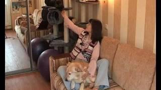 Анна Акашева - зоозащитник и телеведущая