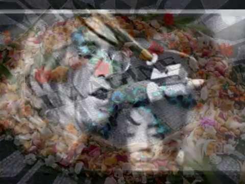 celebrity-autopsy-photos-aaliyah