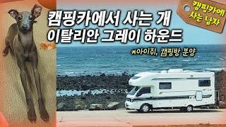 캠핑카에서 사는 개 이탈리안 그레이하운드! 아이쥐 캠핑방 분양!