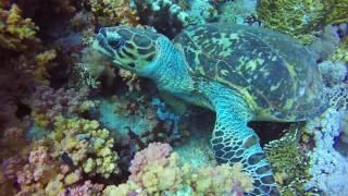 Immersioni Sharm El Sheikh Aprile 2017