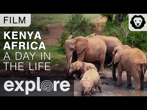 Kenya Africa - A Day in the Life of the Explore Live Cams - Film