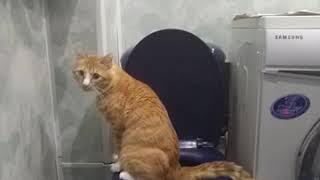 Кот на унитаз ходит в туалет😹