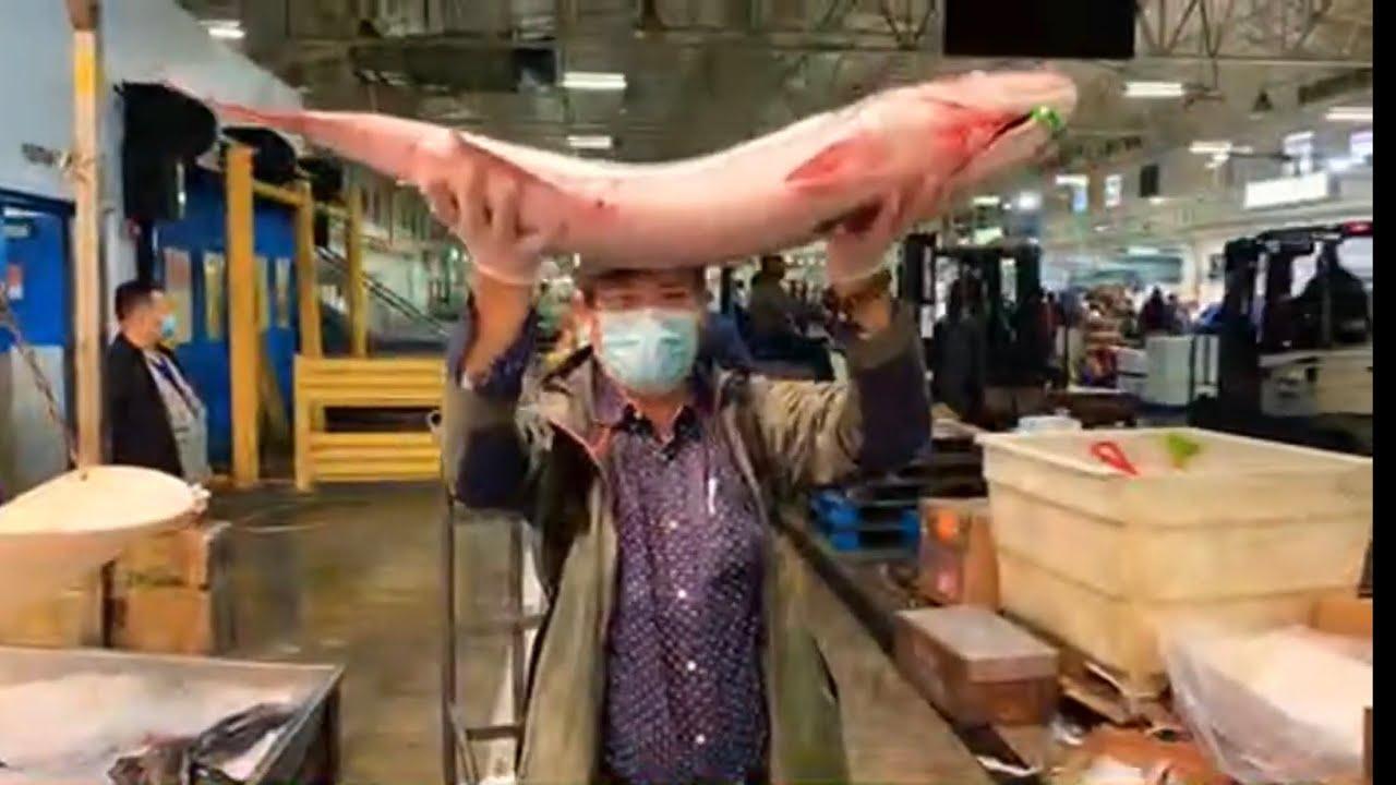 直播9/25 夜闯哈林区只为看看世界第二大海鲜交易市场纽约新富顿海鲜大市场 Live  Visit The New Fulton Fish Market in Harlem at night