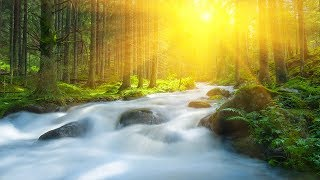 Relaxing Sounds, White Noise, Flowing River, Meditation, Nature Sounds, Water Sounds, ☯3336