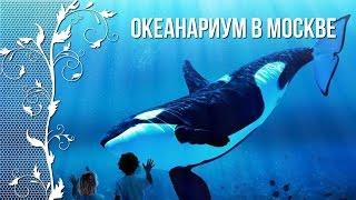 океанариум в Москве. Обзор обитателей аквариумов