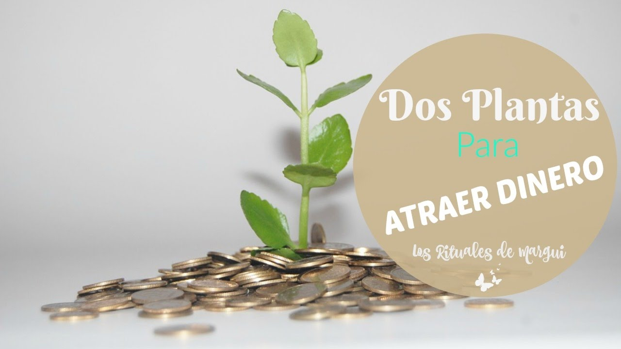 2 plantas para atraer el dinero y c mo usarlas youtube - Como atraer el dinero ...