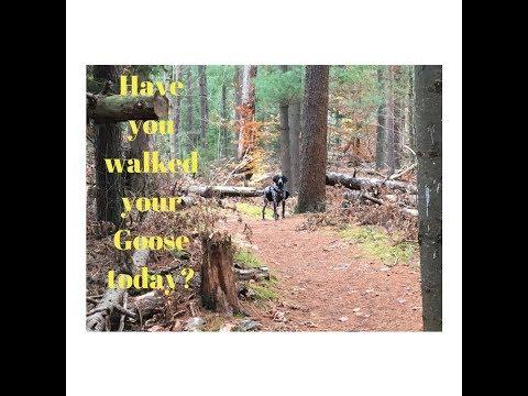 Walking the Goose