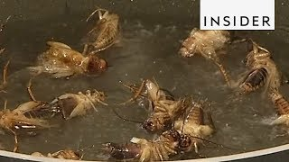Scientists Want Us To Eat Insects