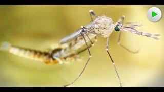 MicroPlanet  - Bizarre Schönheiten der Tierwelt - Natur Doku in voller Länge HD 2018