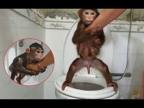 Monkey Doo Knows How To Go To The Toilet