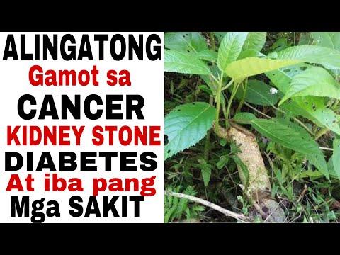 UNBOXING ALINGATONG THE MIRACLE ROOTS  ALINGATONG HERBAL ROOT GAMOT SA CANCER,DIABETES,KIDNEY STONE-