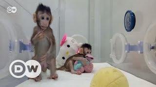 Bilim insanları ilk kez maymun klonladı - DW Türkçe