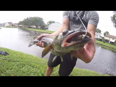 SnakeHead Fishing (feat. Blacktiph, Monster Mike, Ryan Izquierdo)