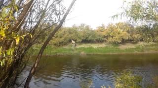 Лось в районе Венгерово.Новосибирская область.