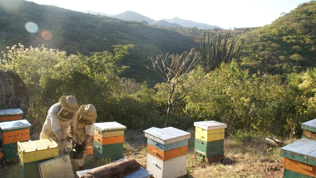 Guadalajara honey