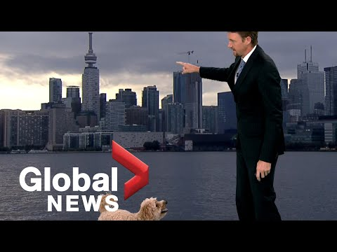 Weather reporter's hungry dog interrupts live TV report looking for treats