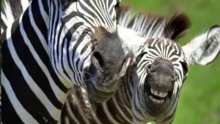 animals funny video in hindi
