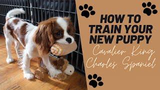 Puppy Training Tips! | Cavalier King Charles Spaniel