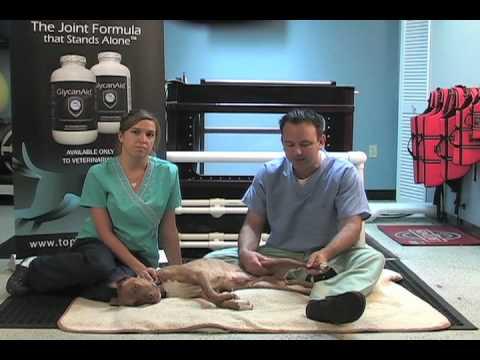 Dog Rehab Passive Range Of Motion 612 925 1121 Doovi