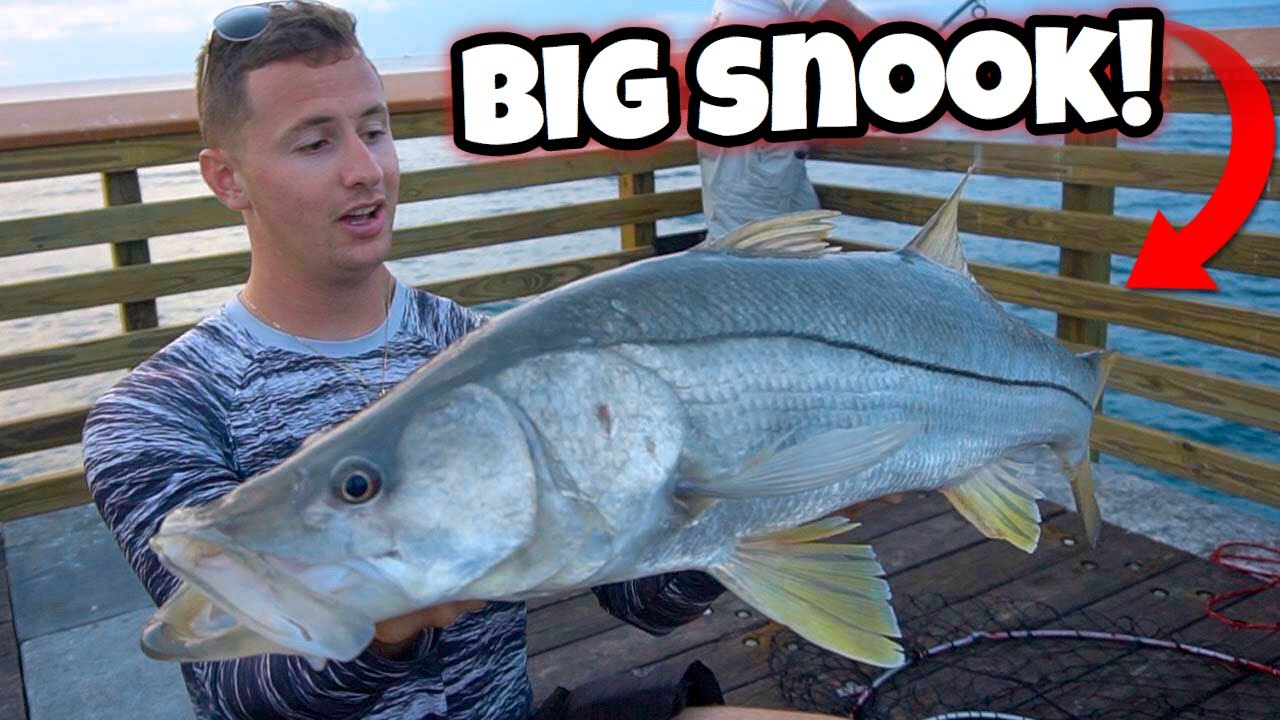Catching MASSIVE SNOOK at PUBLIC Pier! *Insane Action*