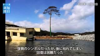 震災5年定点:岩手・陸前高田市 奇跡の一本松