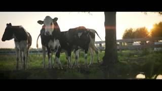 American Windmill - Zaanstad