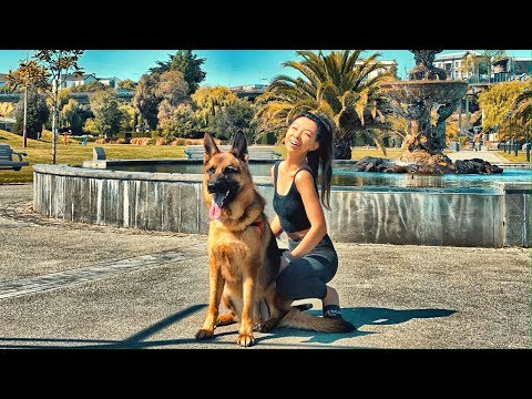 Day in the Life of a German Shepherd - Timaru Road Trip [Part 1]