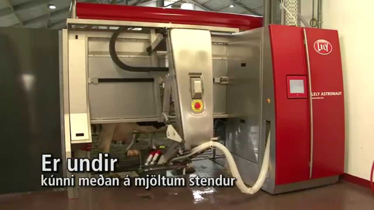 Lely Astronaut A4 - Milking robot arm (Icelandic)