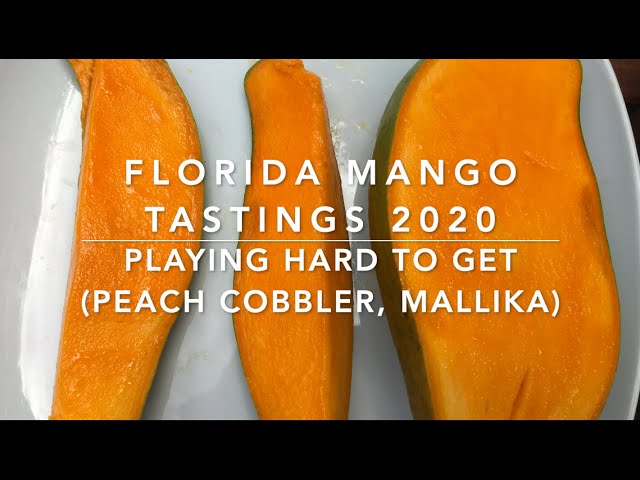 Florida Mango Tastings 2020 - Playing Hard to Get: Mallika & Peach Cobbler Mangoes