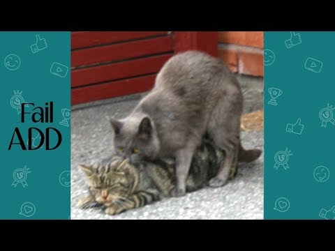 Funny Cat Fails of Week 2 September 2018 ( Part 1)|| Best Fails Compilation By FailADD