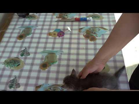 Как часто можно глистогонить кота