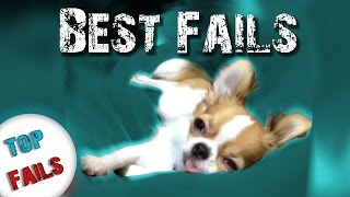 😂 Собака под кайфом 😂 Лучшие Приколы за Январь 2017 ||Top Fails||