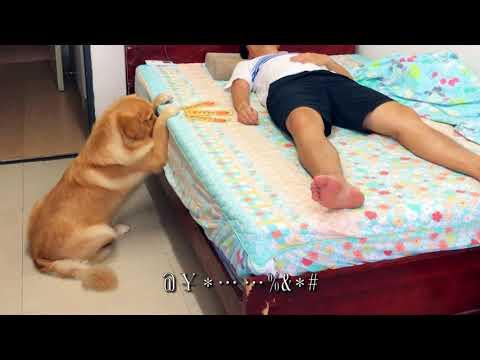 主人肚子痛,狗狗以为他食物中毒,这个反应亮了!