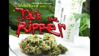 Jack the Ripper medical marijuana - www.WeedYard.com