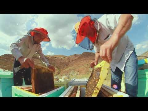 Миру — мёд!   Как Ganea Group хочет сделать Молдову крупнейшим производителем меда в Европе