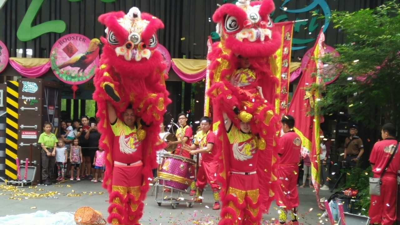 Lion Dance at Singapore Zoo 2017 - YouTube