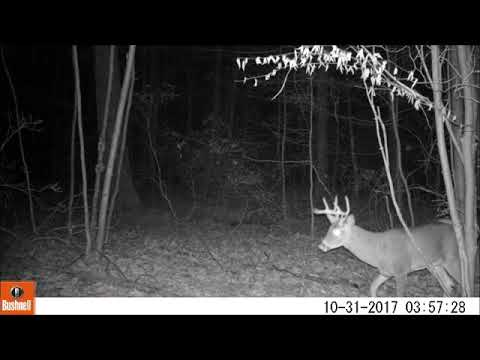 TrailCam 2017 November - Dauphin County PA