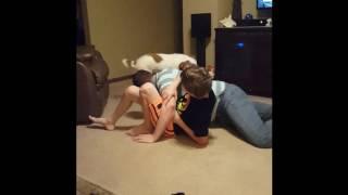 Vicious Brittany Spaniel attack.