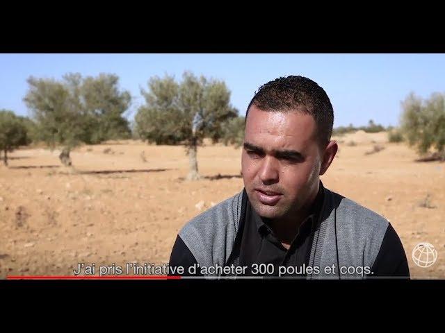 Volaille et accès au crédit donnent un nouveau souffle aux fermes tunisiennes