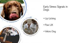 COVID Canines & Stress