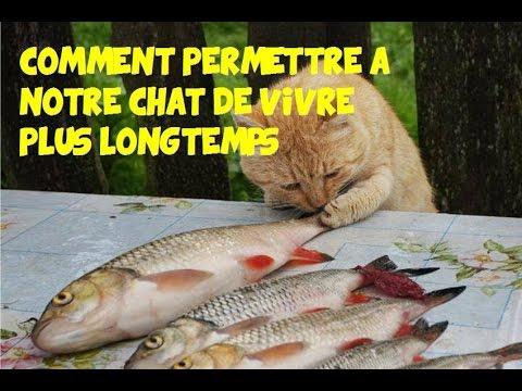Comment Permettre à Notre Chat De Vivre Plus Longtemps