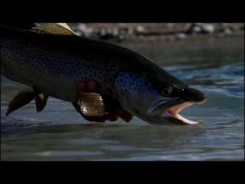 ORVIS - Dealing with A Downstream Take