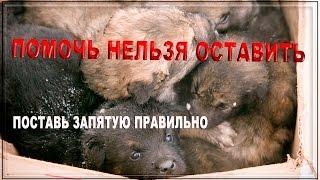 Спасем щенков вместе | Приют для бездомных животных Новосибирск Save the puppies together